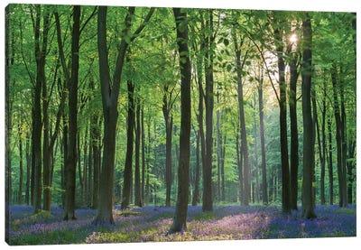 Bluebell Forest II Canvas Art Print