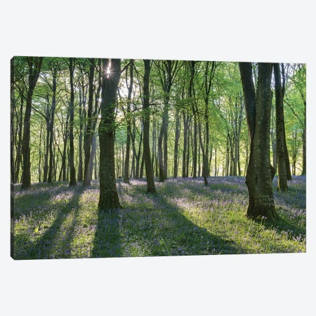 Bluebell Woodland III Canvas Print #ABU126} by Adam Burton Canvas Print