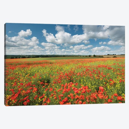 Colours Of Summer Canvas Print #ABU127} by Adam Burton Canvas Print