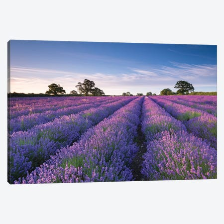 Lavender Field Canvas Print #ABU128} by Adam Burton Canvas Art