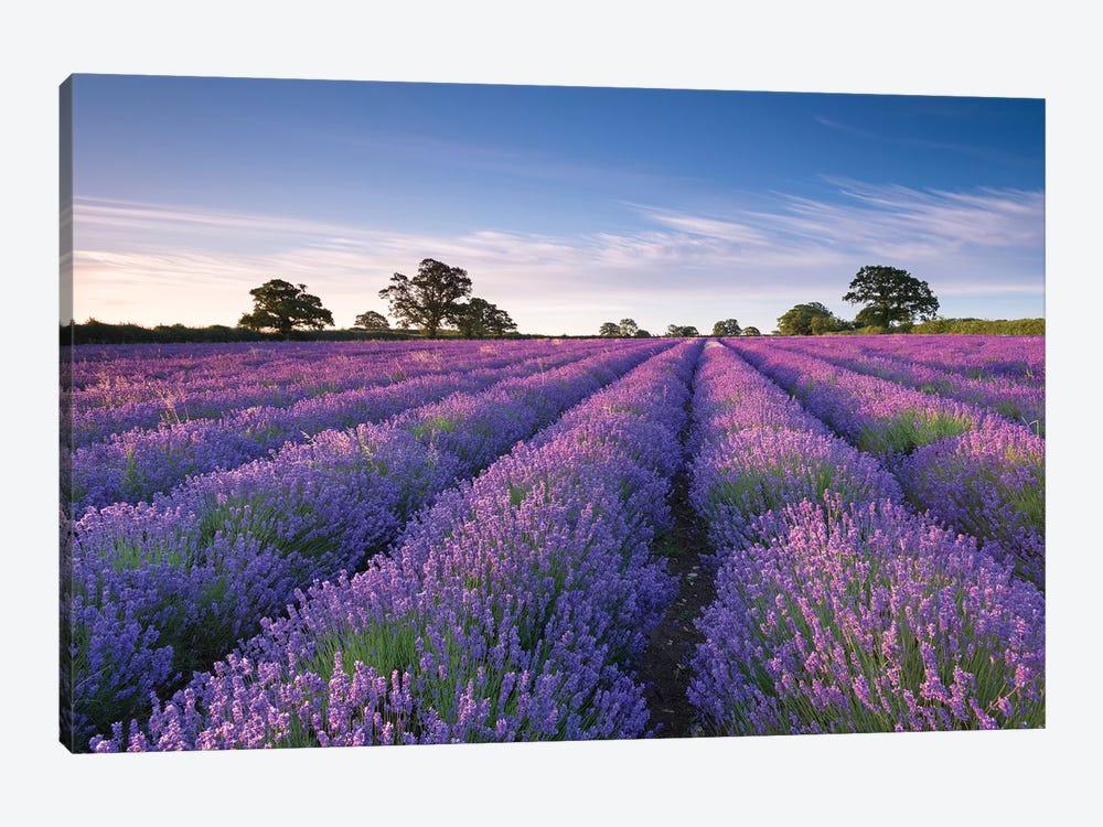 Lavender Field by Adam Burton 1-piece Art Print