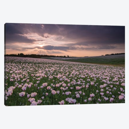 Poppyfield Sunset Canvas Print #ABU129} by Adam Burton Canvas Wall Art