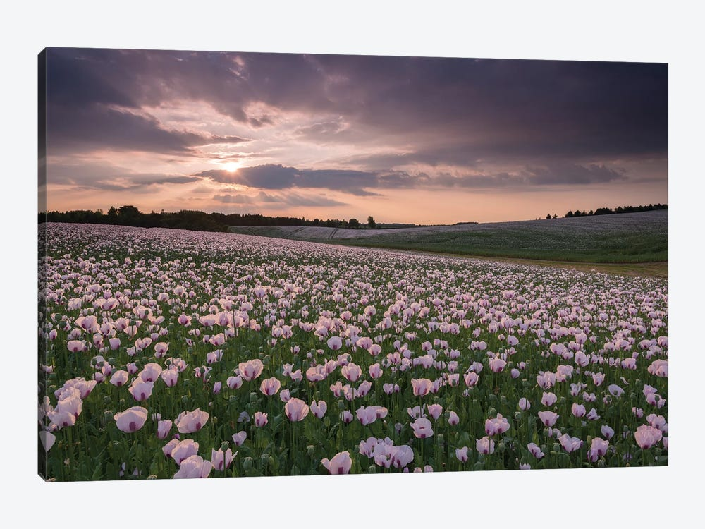 Poppyfield Sunset by Adam Burton 1-piece Canvas Artwork