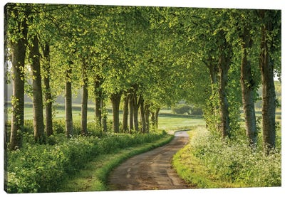 Country Ways Canvas Art Print
