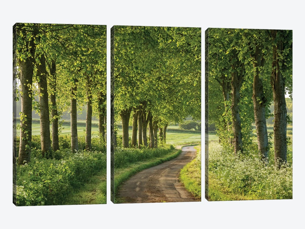 Country Ways by Adam Burton 3-piece Canvas Artwork