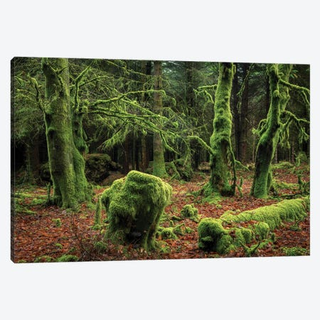 Mysterious Forest Canvas Print #ABU134} by Adam Burton Canvas Wall Art