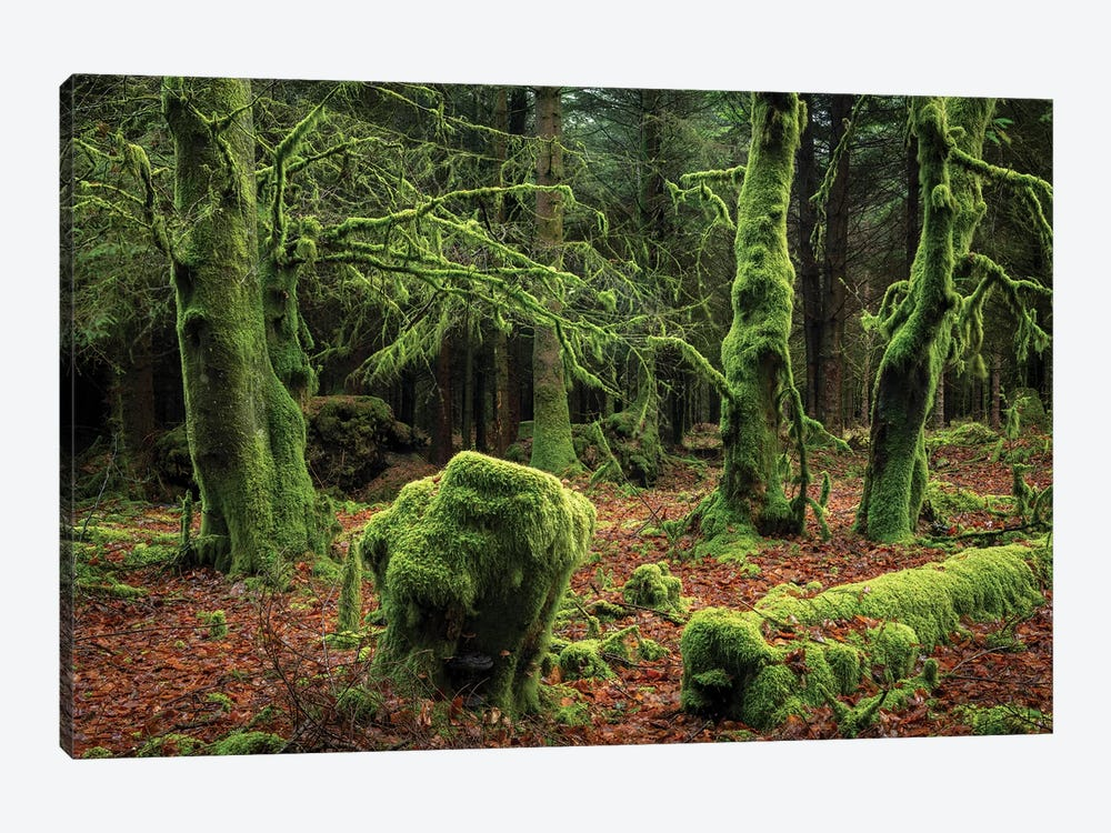 Mysterious Forest by Adam Burton 1-piece Canvas Art