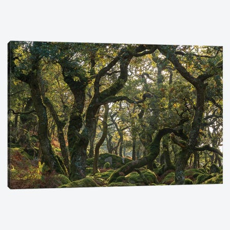 The Wild Wood Canvas Print #ABU135} by Adam Burton Canvas Wall Art
