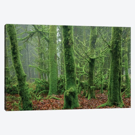 Enchanted Forest I Canvas Print #ABU136} by Adam Burton Canvas Artwork