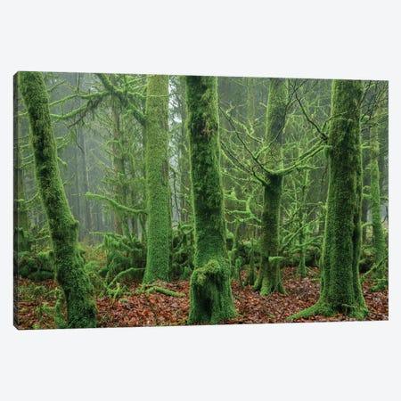 Enchanted Forest I 3-Piece Canvas #ABU136} by Adam Burton Canvas Artwork