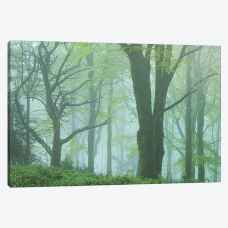 Enchanted Forest II Canvas Print #ABU137} by Adam Burton Canvas Artwork