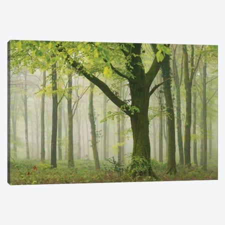 Spring Woodland II Canvas Print #ABU138} by Adam Burton Canvas Art Print