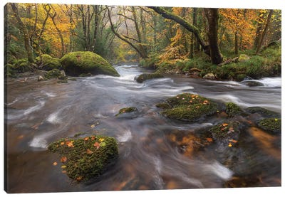 Forest Stream Canvas Art Print