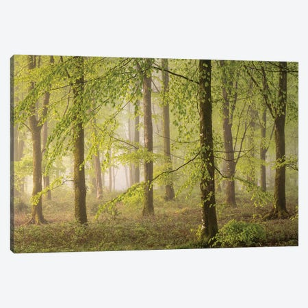 Woodland Realms Canvas Print #ABU140} by Adam Burton Canvas Artwork