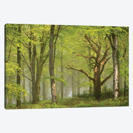 Beautiful Forest Canvas Print #ABU141} by Adam Burton Canvas Wall Art