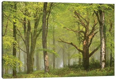 Beautiful Forest Canvas Art Print
