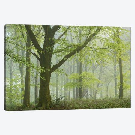 Spring Woodland III Canvas Print #ABU143} by Adam Burton Canvas Wall Art