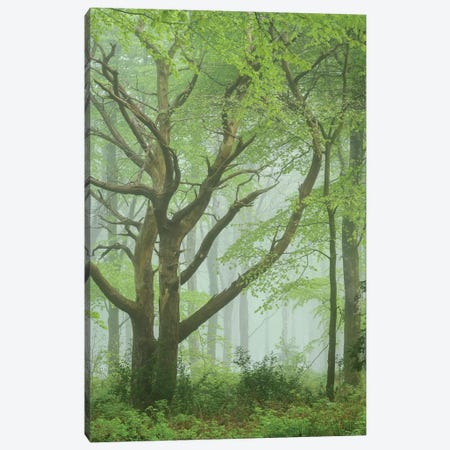 Dancing Trees Canvas Print #ABU144} by Adam Burton Canvas Art Print