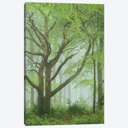 Dancing Trees Canvas Print #ABU144} by Adam Burton Canvas Art Print