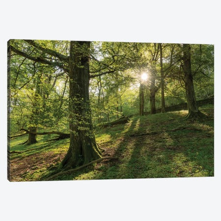 Summer Woodland Canvas Print #ABU146} by Adam Burton Canvas Print