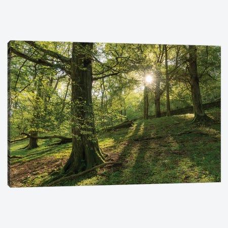 Summer Woodland Canvas Print #ABU146} by Adam Burton Canvas Print
