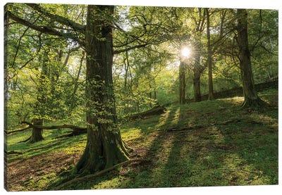 Summer Woodland Canvas Art Print