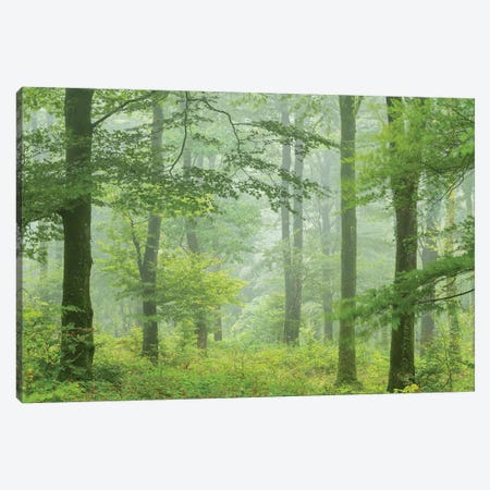 Misty Summer Forest Canvas Print #ABU147} by Adam Burton Canvas Print