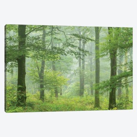 Misty Summer Forest 3-Piece Canvas #ABU147} by Adam Burton Canvas Print