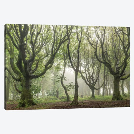 Woodland Realms II Canvas Print #ABU148} by Adam Burton Canvas Wall Art