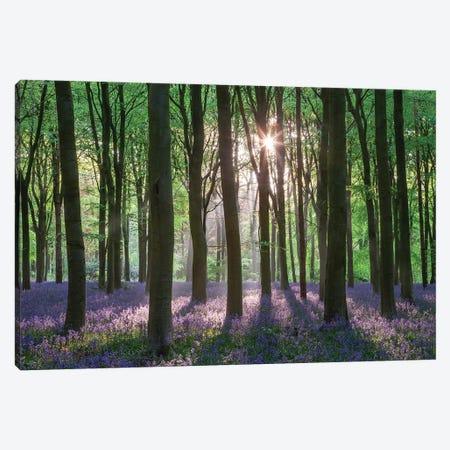 Wildflower Woodland II Canvas Print #ABU150} by Adam Burton Canvas Art Print