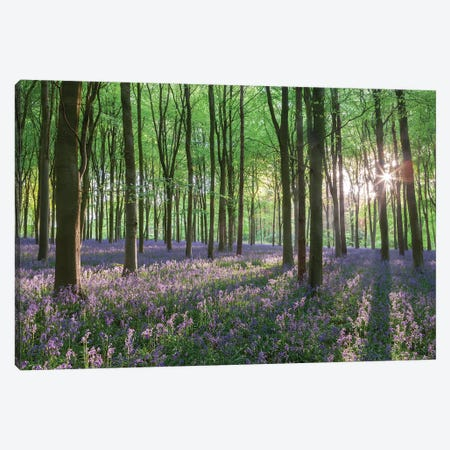 Wildflower Woodland I Canvas Print #ABU151} by Adam Burton Canvas Art Print