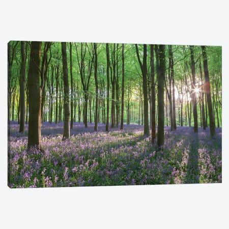 Wildflower Woodland I 3-Piece Canvas #ABU151} by Adam Burton Canvas Art Print