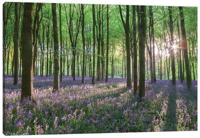Wildflower Woodland I Canvas Art Print