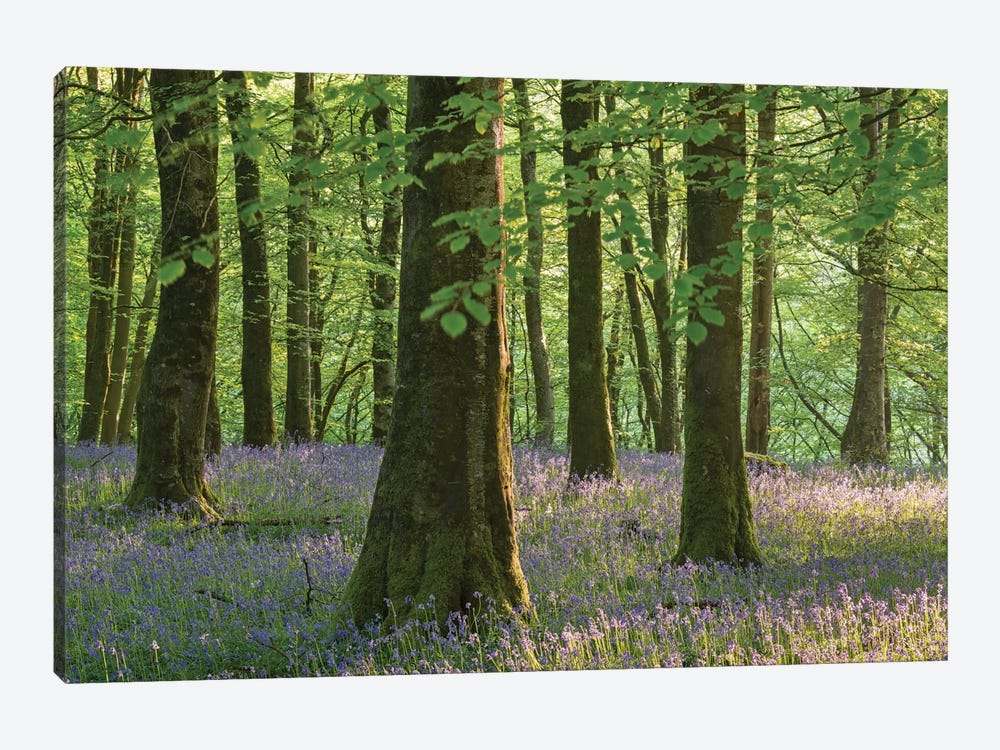 Exmoor Bluebells by Adam Burton 1-piece Canvas Art Print