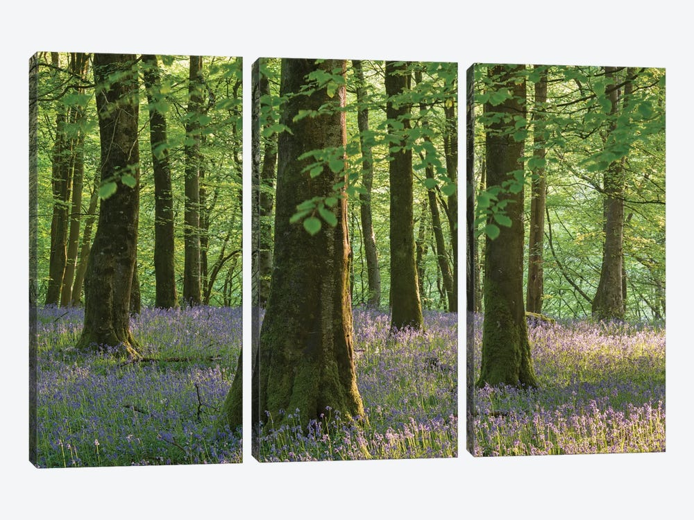 Exmoor Bluebells by Adam Burton 3-piece Canvas Art Print