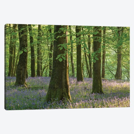 Exmoor Bluebells 3-Piece Canvas #ABU15} by Adam Burton Canvas Print