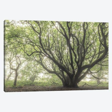 The Faraway Tree Canvas Print #ABU177} by Adam Burton Canvas Artwork