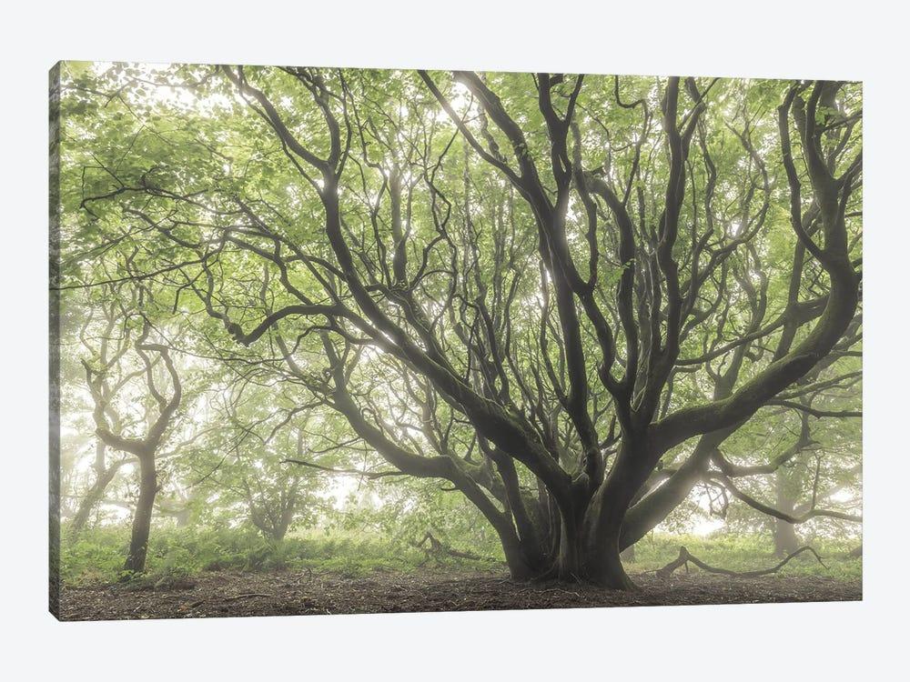 The Faraway Tree by Adam Burton 1-piece Art Print