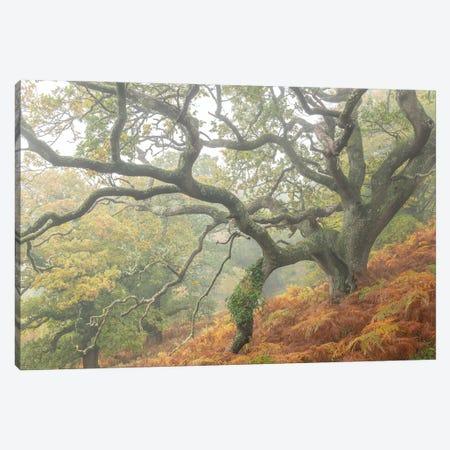 The Magic Faraway Tree Canvas Print #ABU178} by Adam Burton Canvas Print