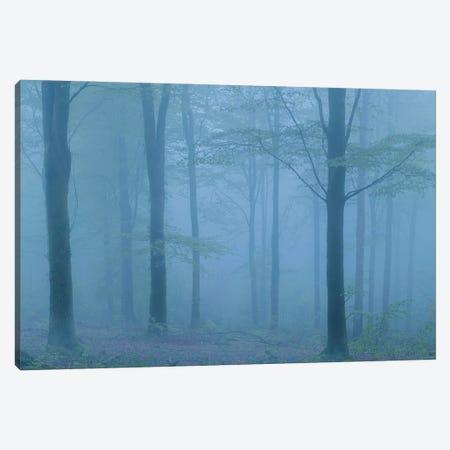 Into The Blue Canvas Print #ABU180} by Adam Burton Canvas Wall Art