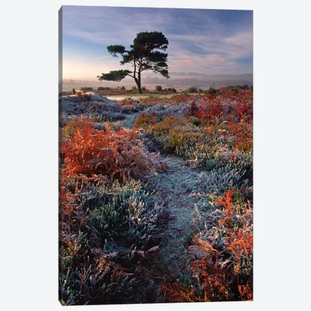 A Frosty Morning Canvas Print #ABU1} by Adam Burton Canvas Artwork