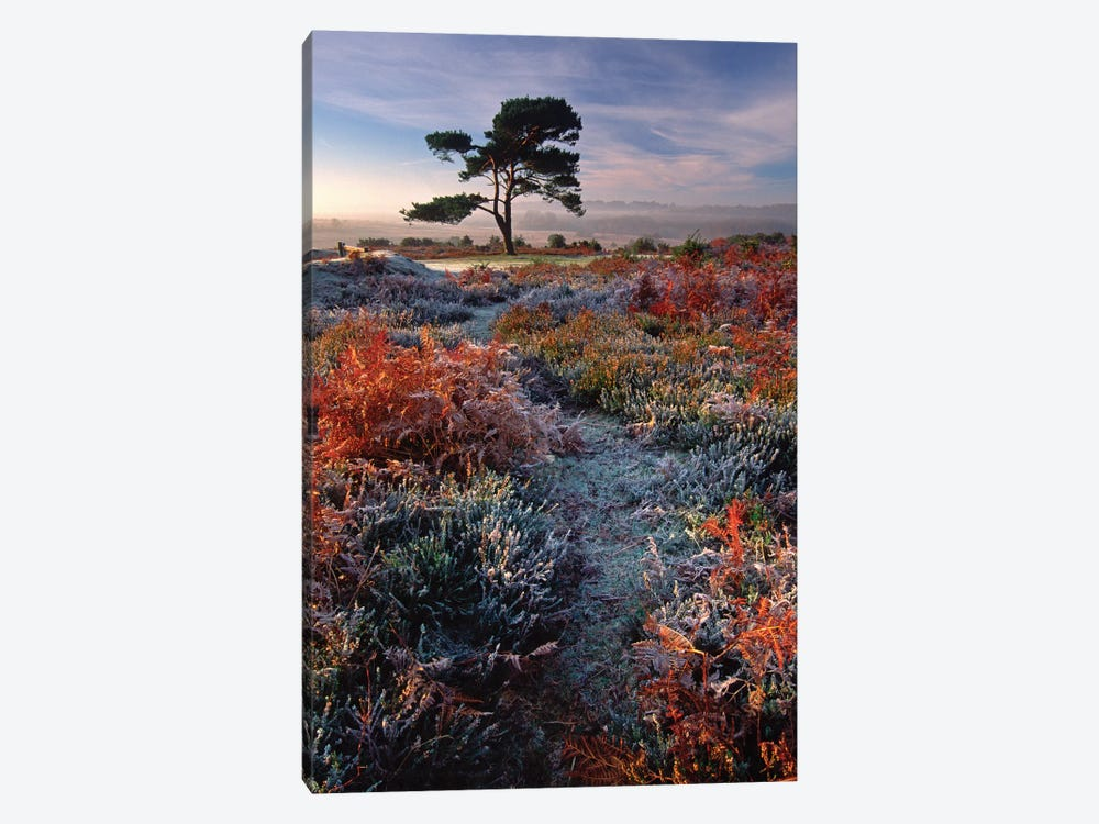 A Frosty Morning by Adam Burton 1-piece Canvas Art