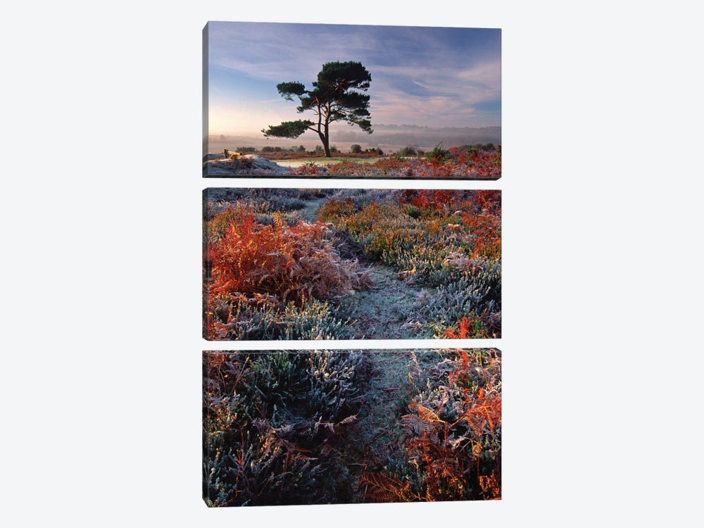 A Frosty Morning by Adam Burton 3-piece Canvas Artwork