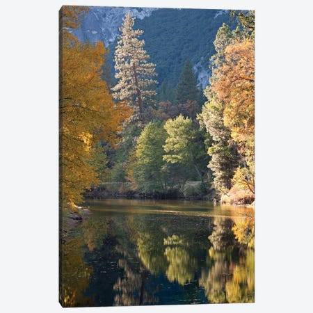 Golden Yosemite Canvas Print #ABU20} by Adam Burton Art Print