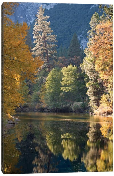 Golden Yosemite Canvas Art Print