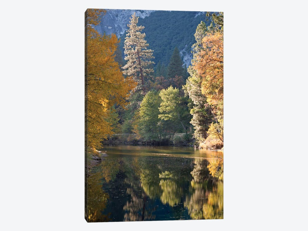 Golden Yosemite by Adam Burton 1-piece Canvas Print