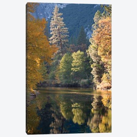 Golden Yosemite Canvas Print #ABU20} by Adam Burton Art Print