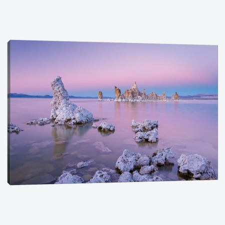Mono Pinks Canvas Print #ABU31} by Adam Burton Canvas Art