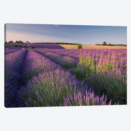 Pink and Purple Canvas Print #ABU34} by Adam Burton Canvas Art Print