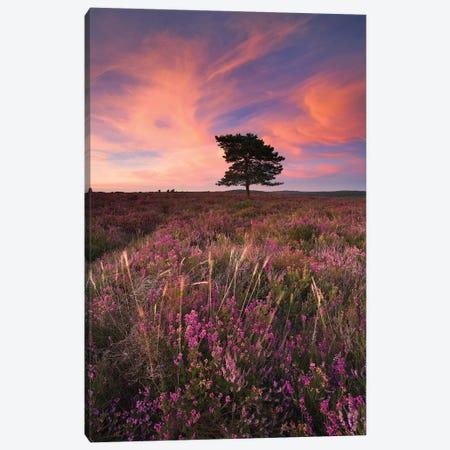 Pretty in Pink III Canvas Print #ABU36} by Adam Burton Canvas Print